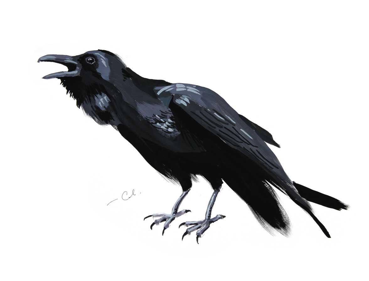 ворон гуашь