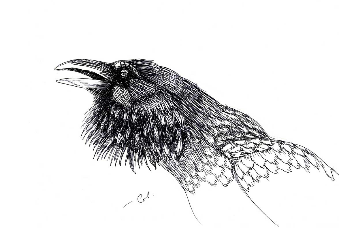 Raven kalem, перо, astar
