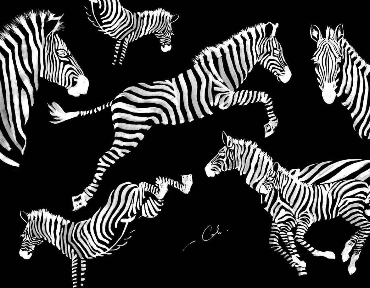 Animal rytme Z