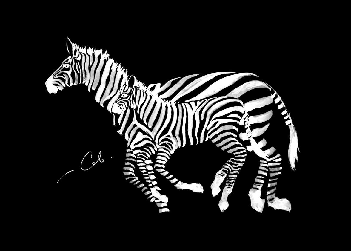 Зебры, papír, tinta